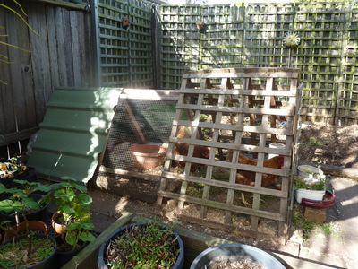 How to Keep Chickens in Your Backyard - Sydney