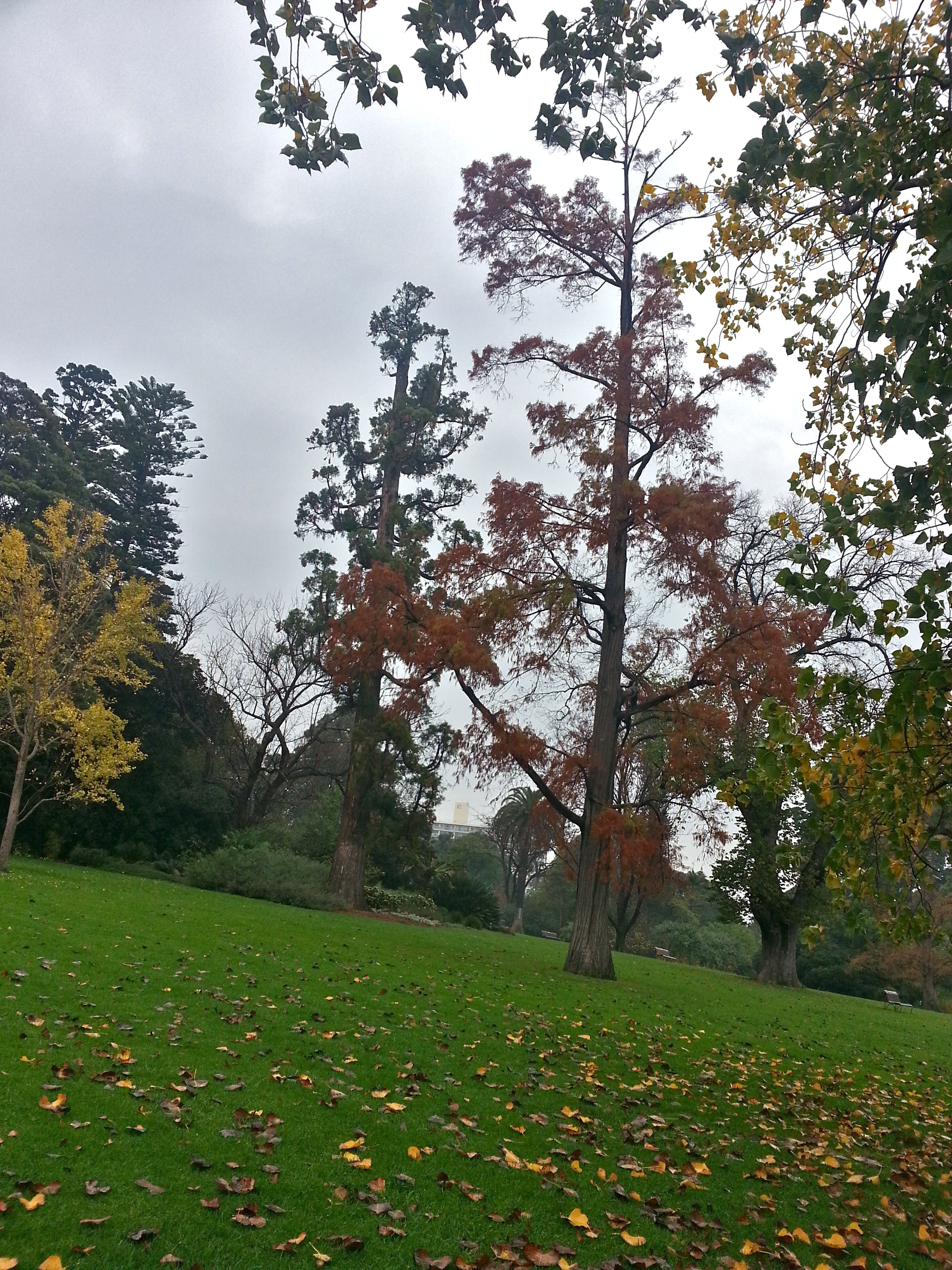 a rainy day in the royal botanic gardens melbourne melbourne