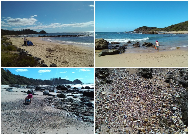 shelly beach, port macquarie, nsw, family, kids shells, children, shell collecting