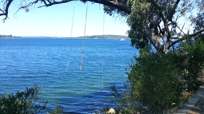 Swan River Rope Swing, Peppermint Grove walking trail, rope swings on the river, overhanging trees, deep water rope swings, peppermint grove, mosman park, freshwater bay