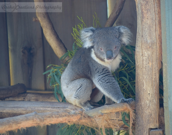 wildlife, animals, park, nature, kangaroos, sanctuary, outdoors