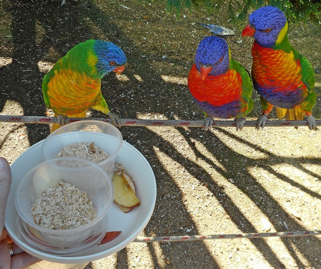 canberra walk in aviary, gold creek village, ACT, families, kids, gold creek village, birds,