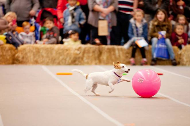 Dog lovers show, sydney, dogs