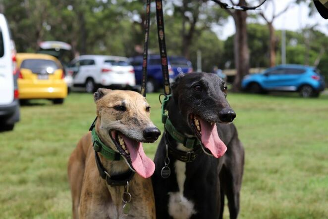 dogs in the park, charity, outdoor, nsw, sydney, cronulla, park, dog competitions