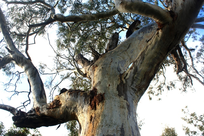 Up in their branches – photo Jenny Esots