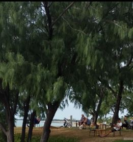 Nightcliff jetty, saturday, Darwin,