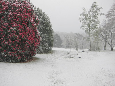 October spring snow in the Blue Mountains