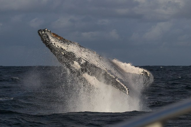 Photo taken by: Whale Watching Sydney
