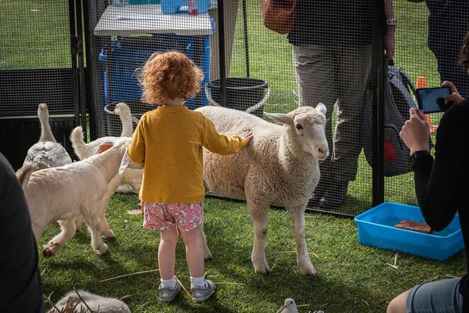 prospect spring fair, yarnta tutu yarta, broadview oval, food trucks, hay bale, coffee, pop up bar, face painting, bouncy castle, giant fames, competitions, amusement rides, animal rides, petting zoo, sports zone, nature crown making, market, eco market, mobile junk and nature playground, flyball dog racing