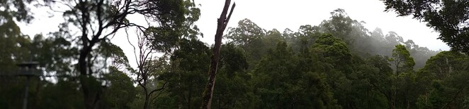 treetop view, view, Otway, forest