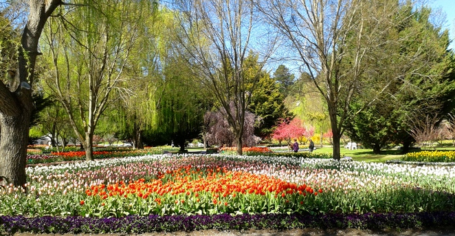 tulip tops gardens, sutton, floriade, ACT cfamily and community day, september 2016,