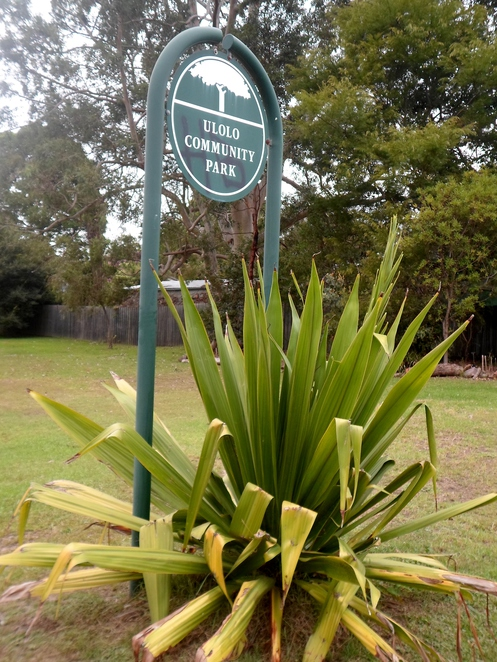 ulolo community park, ulolo avenue reserve, ulolo park, hornsby heights park