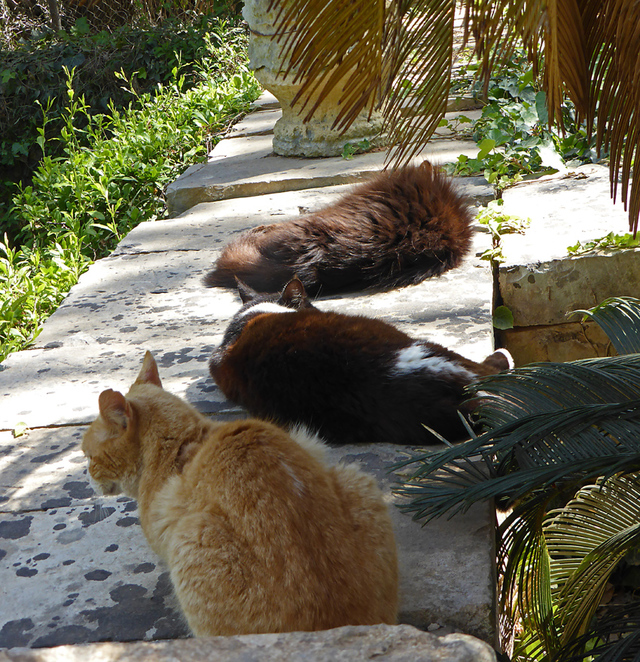 Valletta, Mediterranean cruise, Malta, Gardens, nature, cats