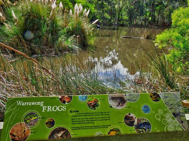 Warrawong Wildlife Sanctuary, warrawong, sanctuary, adelaide hills, ecosystem, crowdfunding, south australian, mylor, wildlife, frogs