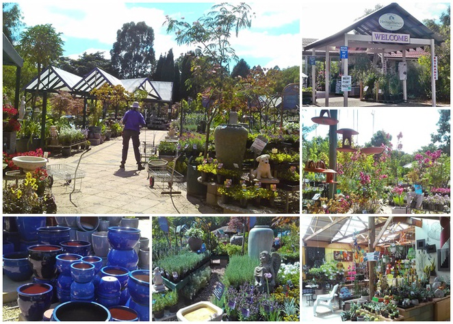 yarralumla nursery, heritage nursery, canberra, ACT, plants, trees, cheap plants,