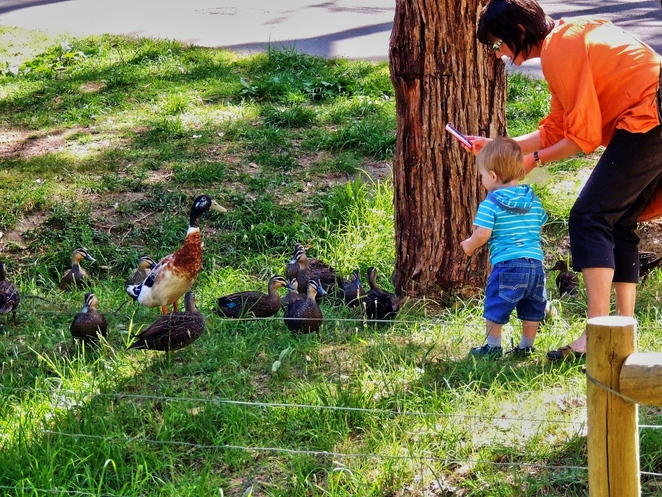 activities for kids, kids in adelaide, parks in adelaide, nature play, south australian children, fun things to do, free things to do, in adelaide, south of adelaide, feeding the ducks