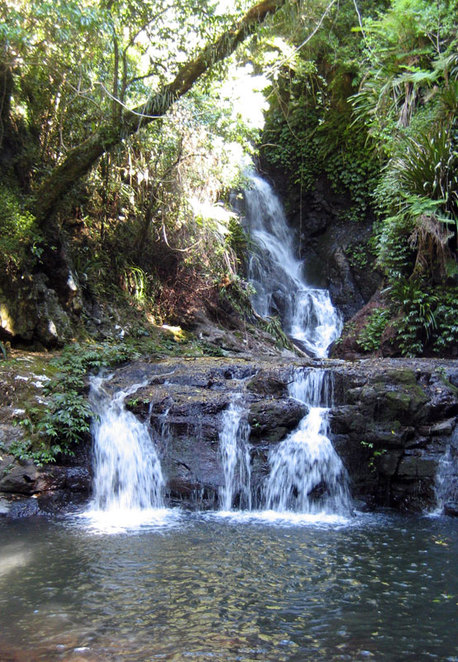 One of the many waterfalls on the Box Forest Circuit