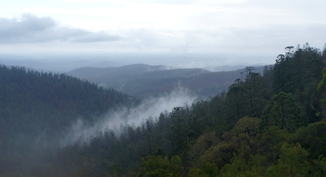 Hoop and Bunya Pines seen from Pine Gorge Lookout on a misty day