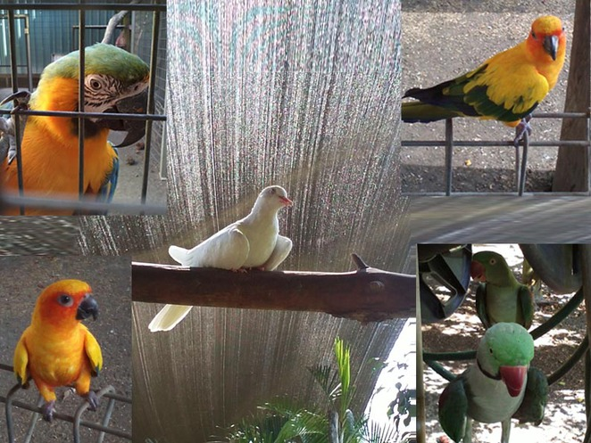 PARROTS, FREE, FLYING, BEAUTIFUL,FRIENDLY