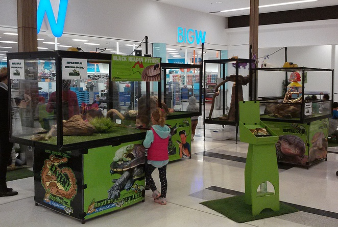 reptiles inc, canberra, school holidays, majura park shopping centre, ACT, kids, children,