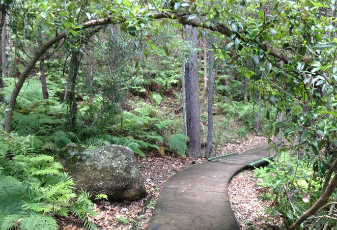 Springwood Stairs of Death, Springwood Conservation Park, outdoor workout, stairs exercise