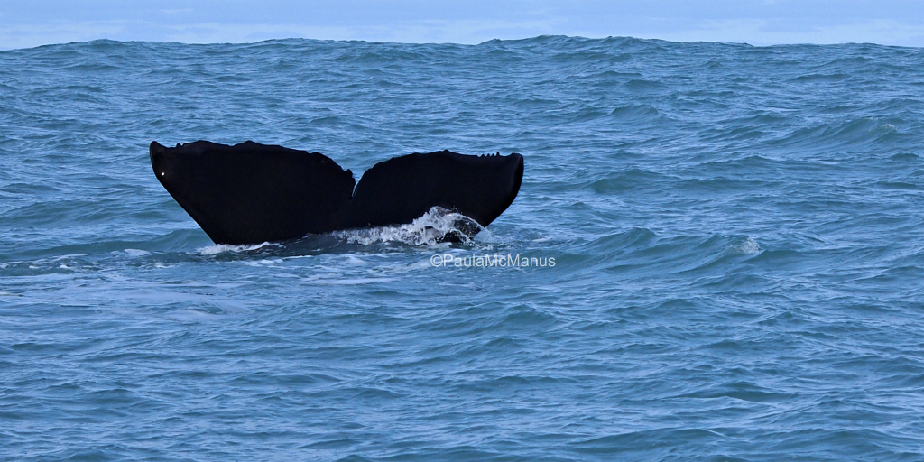 Victor Harbor Whale Watching Adelaide