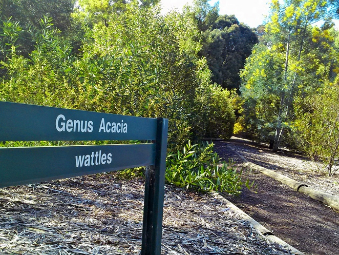 australian national botanical gardens, canberra, ACT, things to do, gardens, seniors, flowers, spring, wattles,