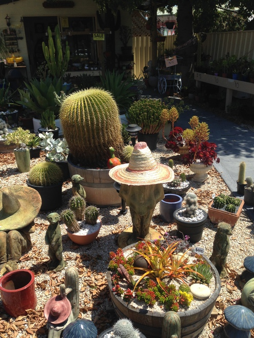 cactus creations, mclaren vale, cactus adelaide, gardening adelaide, garden centres, succulents adelaide, things to do in mclaren vale