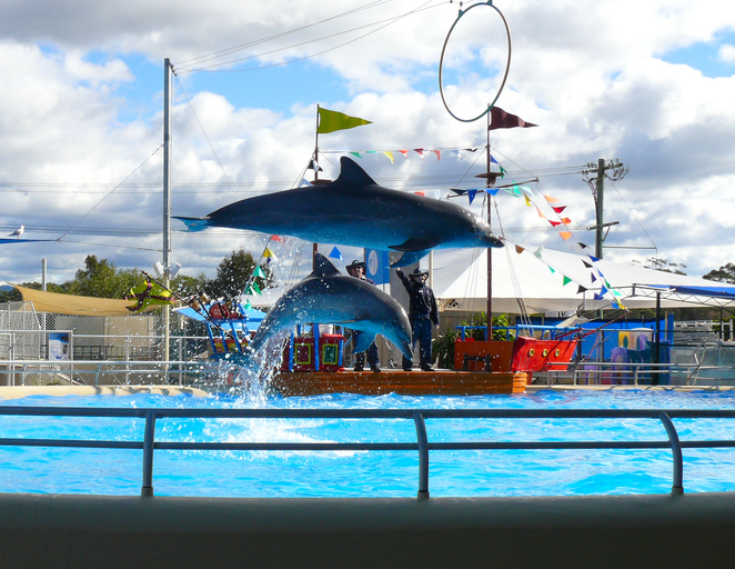 dolphin, marine magic, pet porpoise pool, coffs harbour, animal, park, nsw, north coast