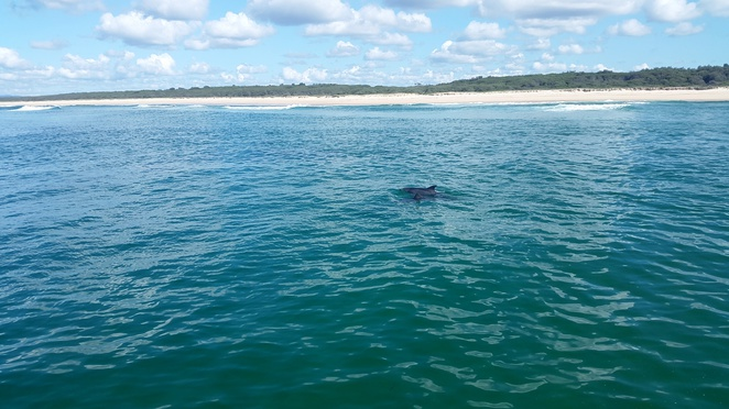 Easy dolphin spotting on board Amaroo cruises