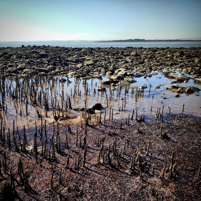 French Island, westernport bay, ferry ride, explore, hiking, national park, bike riding, mangroves