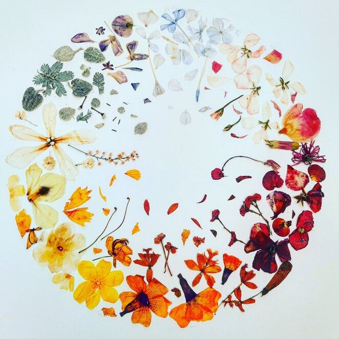 Pressed flower artwork by the writer