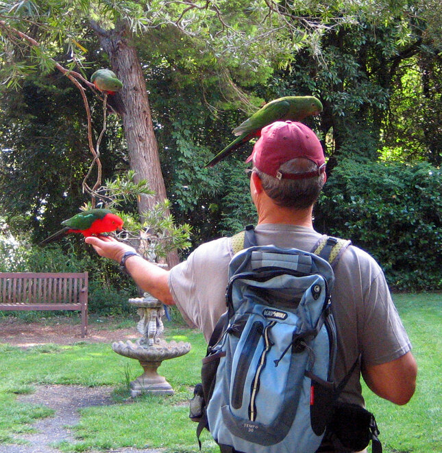 Even if you don't want some country cuisine, it is worth stopping at the Queen Mary Falls cafe to feed the birds