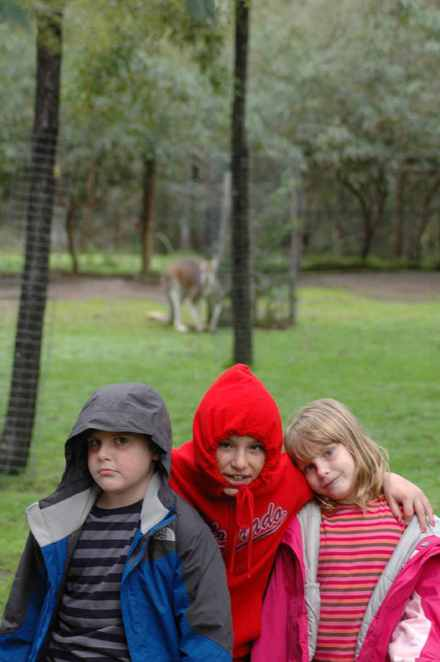 Big Red Kangaroos