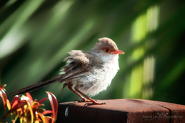 birds, photography, backyard, nature, wildlife, Tracie Louise Photography