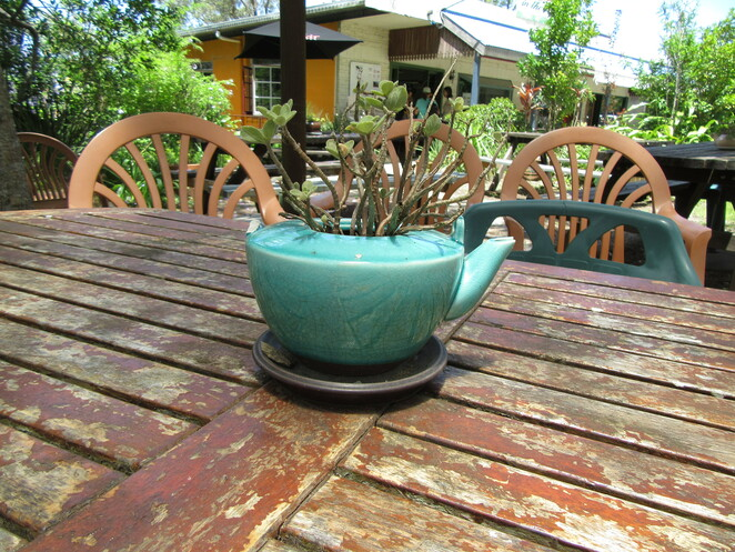 Cafe in the Mountains Mount Nebo Mount Glorious Hiking in D'Aguilar National Park Wildlife Magpie