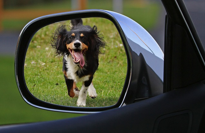 dog running rear view mirror car abandoned chase