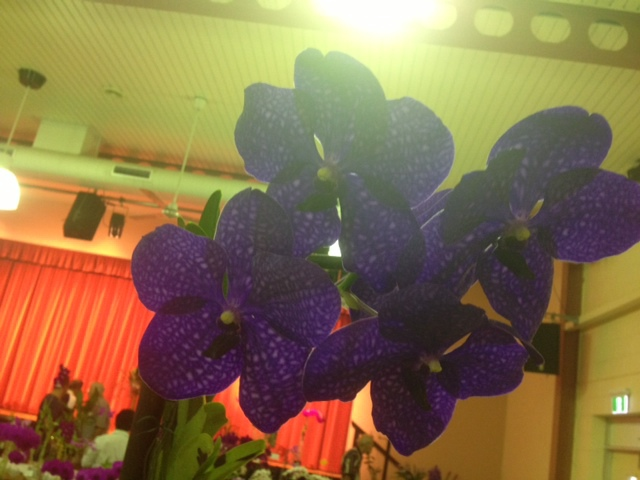 Just one of the orchids on show.