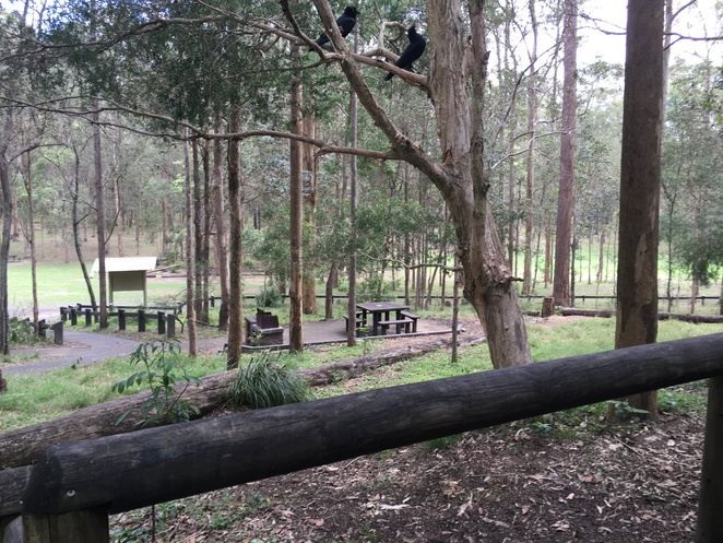 Koalas, Eucalyptus, Daisy Hill, RSPCA, Animal Hospitals, Kids, Educational, Wildlife, Free