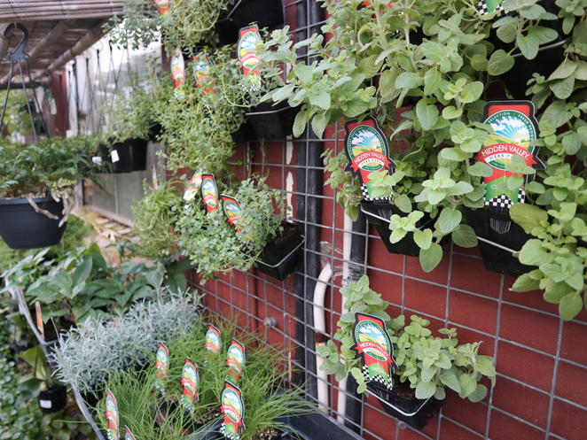 Mappins West End nursery kitchen garden vertical balcony herbs