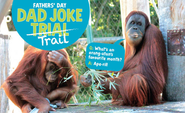 Melbourne Zoo Dad Joke Trail Zoos Victoria Father's Day activities
