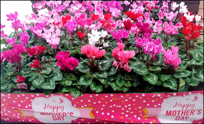 mothers day, flowers, gifts for mum, things to do on mothers day, mothers day adelaide