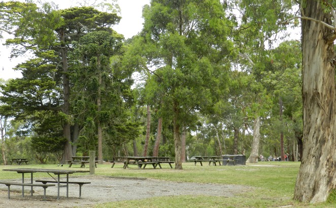 pines picnic, jells park, wheelers hill, playgrounds in melbourne, picnic areas in melbourne, victorian national parks, children's playground, free day out,