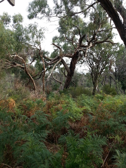 The Pines Flora and Fauna Reserve