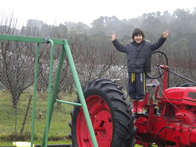 tractor, fun, children, play