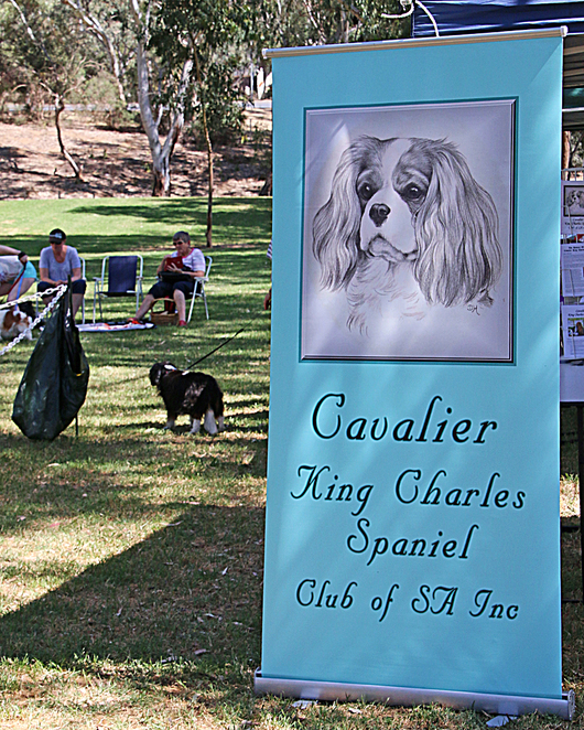 cavalier, king, charles, spaniel, capers, funday. sign