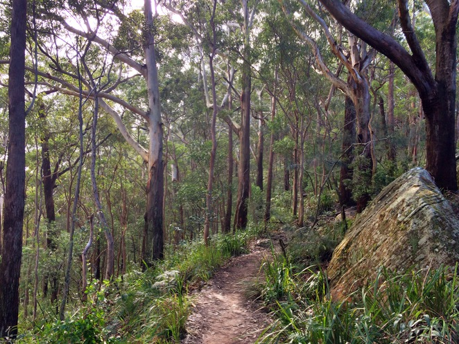Cliff Track, Royal National Park