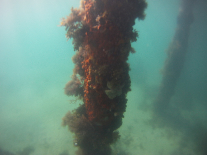Diving at Rye Pier
