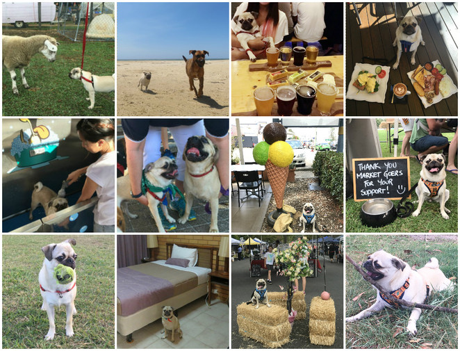 dog park, swimming, dog friendly, brisbane, spoil your dog, things to do with your dog, activities to do with your dog