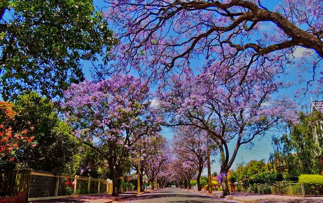 free things to do, whats on in adelaide, activities for kids, fun for kids, markets in adelaide, christmas markets, fun things to do, christmas gifts, in adelaide, jacarandas in adelaide